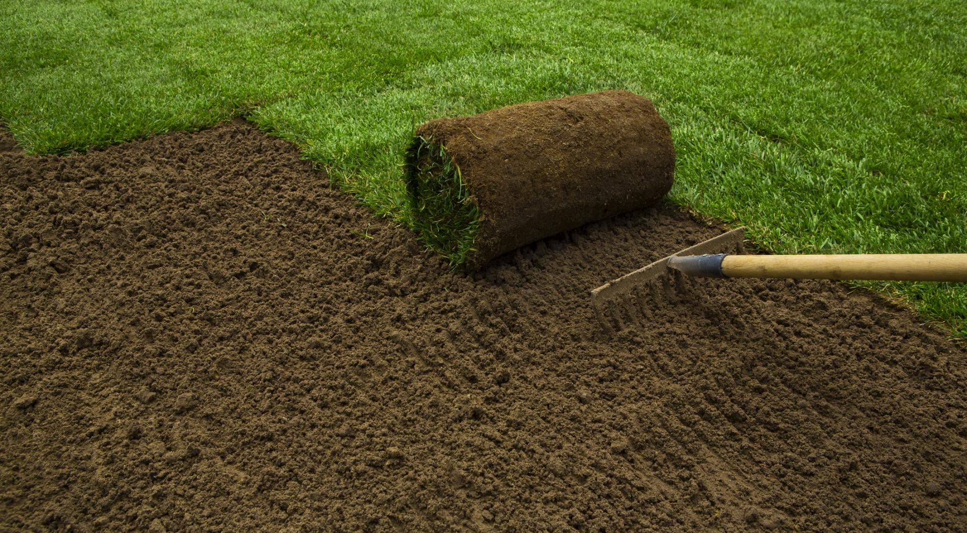 Rasen & Pflege